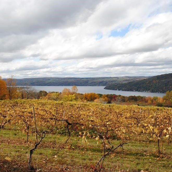 Keuka Lake Bluff View & Vineyards