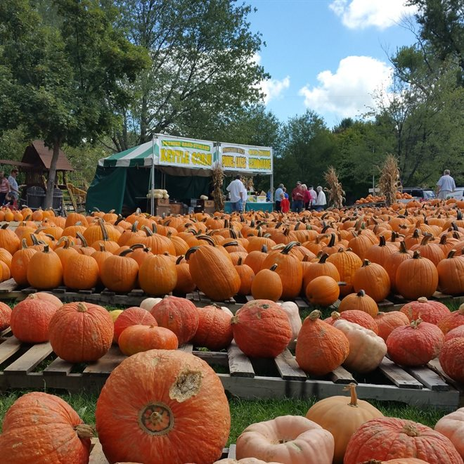 Pumpkins in Chesterland