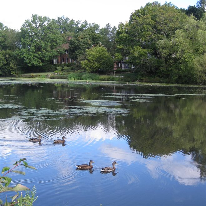 Duck Pond in Shaker Heights